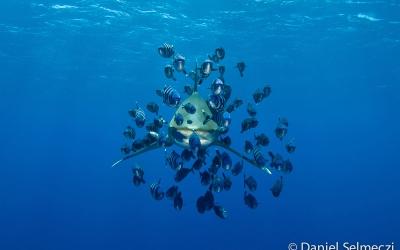 Egypt underwater Elphinstone shark