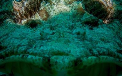Egypt underwater