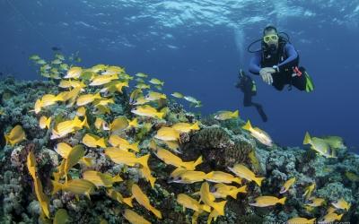 Scuba diving at Darraka in Sudan