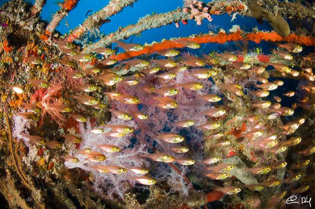 Cousteau's Precontinent