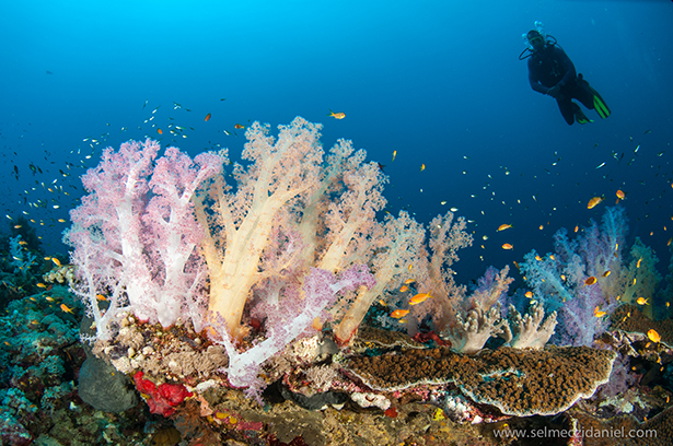 sudan_diving_liveaboards_red_sea_cruise_dive_site