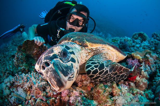 scuba_diving_south_sudan_liveaboard_trip_redsea