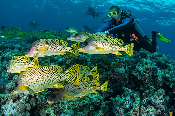 andromeda, sudan, red sea, liveaboard, reef sharks, silky sharks, white-tip sharks, barracudas, hammerheads, dolphins, turtles