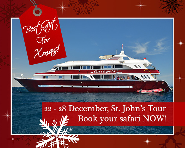 Xmas Diving Safari on a Liveaboard