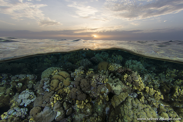 Sanganeb reef in Sudan