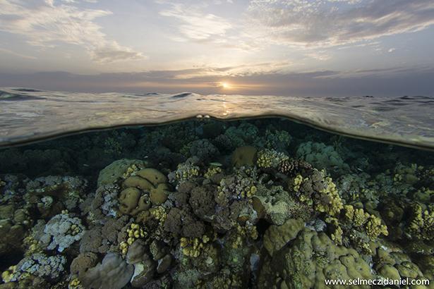 Sanganeb reef in Sudan