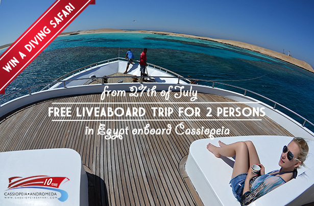 Free diving safari on a liveabord Egypt