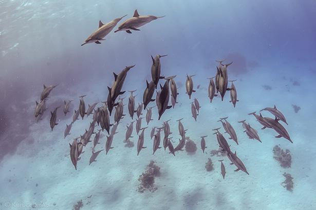 Dolphins Egypt