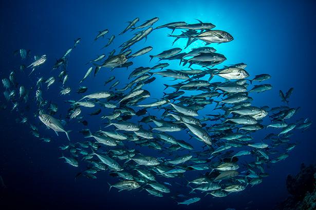 Shoals of fish in Sudan