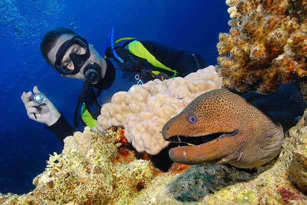 Corals with moray