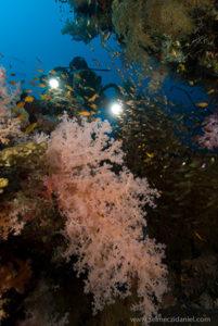Videographer scuba diver