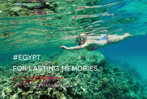 A liveaboard safari in the Red Sea