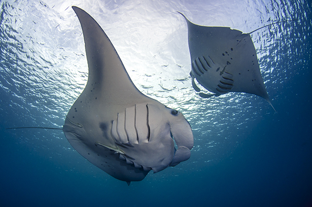 Red Sea Diving Holiday Offers Egypt