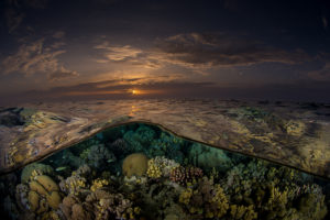 Scuba diving liveaboard in Sudan